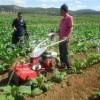 小型微耕机开沟培土机果园开沟机培土开沟机农用开沟机