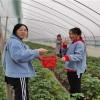 长沙户外活动 户外团建拓展 沃之园生态农庄